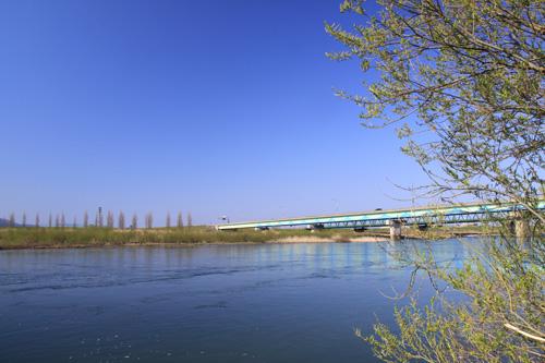 新潟 村上 荒川サクラマス釣り