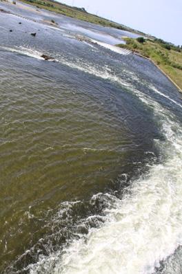荒川 鮭遡上