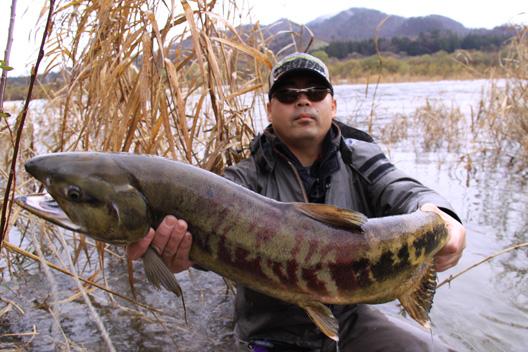 2010荒川鮭釣り12月3日