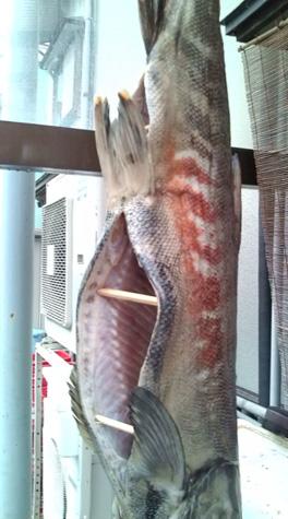 荒川鮭塩引き作り