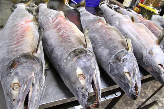 冷凍塩引き鮭 荒川産