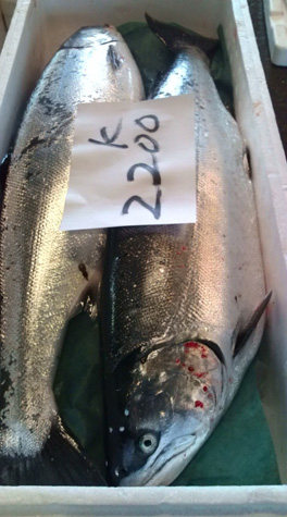 北海道産 釣り鱒