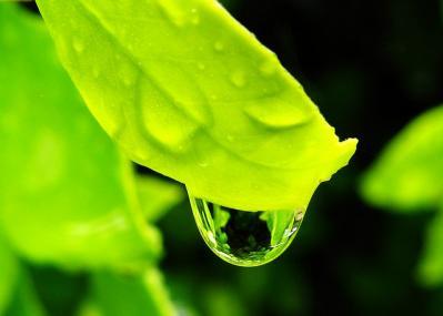 ドロップ 雫 葉っぱ 緑