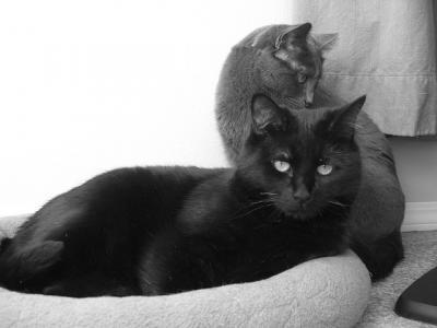 ネコ モノクロ 白 グレー
