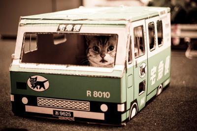 クロネコ 段ボール 猫