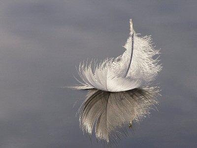 羽根 水面