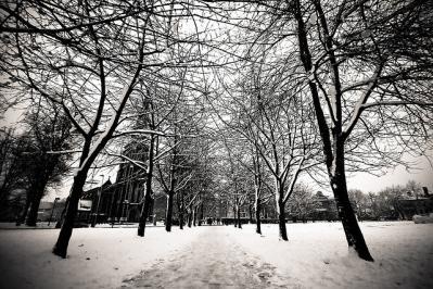 シンメトリー 街路樹 雪 モノクロ