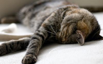 猫 昼寝 もふもふ
