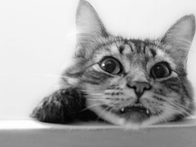 猫 モノクロ