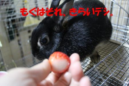 kirai_20101203192251.jpg