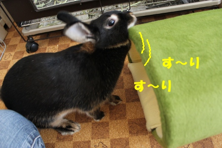 surisuri_20101016222408.jpg