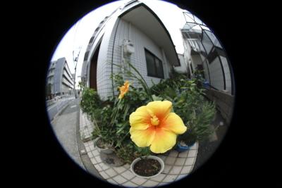 _31A5901.jpg