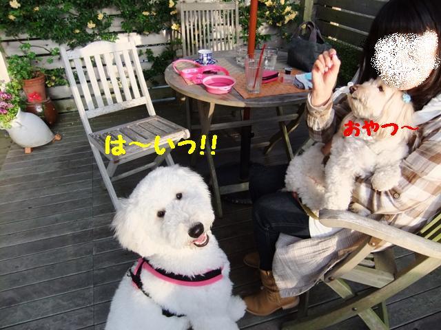 ぷーとレオン