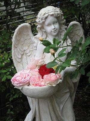s-天使とバラ1