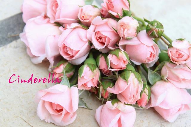 s-シンデレラの花束-2