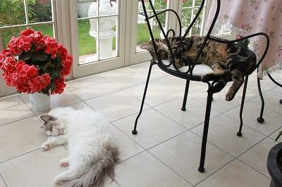 s-並んで猫