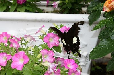 s-花と蝶