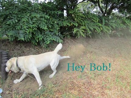 犬の砂かけ