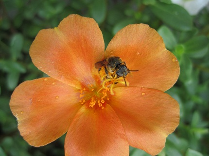 蜂とオレンジの花