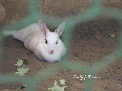 美人ウサギ