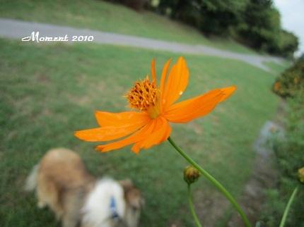 花とLIME