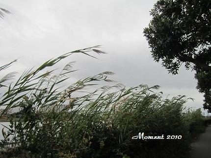 風の遊歩道