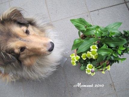 ライムと花