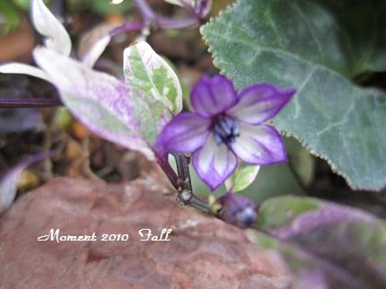 紫の花咲いた