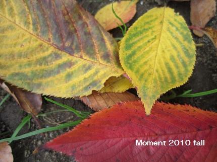 葉いろいろ