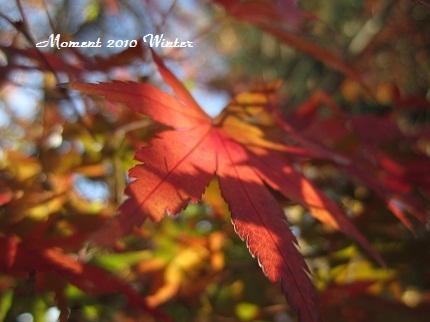 もみじを映す紅葉