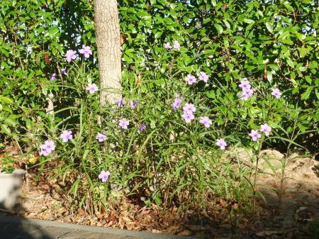 ももたちと花(1)