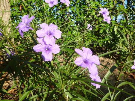 ももたちと花(2)