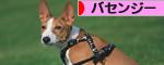 にほんブログ村 バセンジー人気ランキング