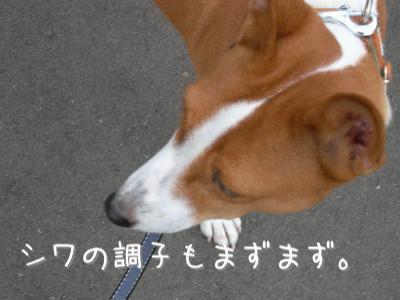 DSCN2595_convert_20100701214741.jpg