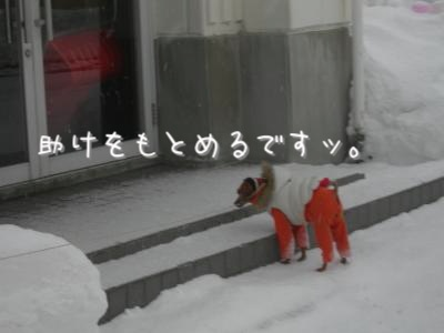 DSCN2917_convert_20110130205902.jpg