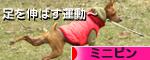 にほんブログ村 ミニピン人気ランキング