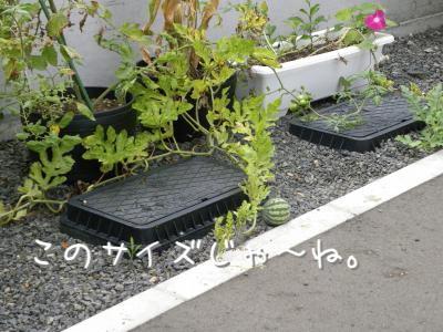 DSCN5087_convert_20100905172311.jpg