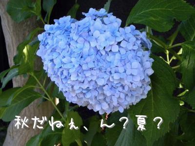 DSCN5099_convert_20100909201242.jpg