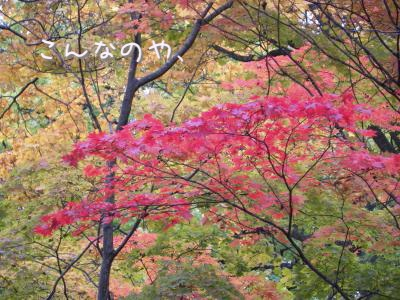 DSCN6003_convert_20101114210353.jpg