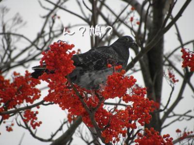 DSCN6442_convert_20101219210046.jpg
