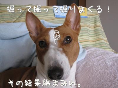 IMG_1846_convert_20100215154639.jpg