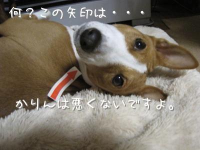 IMG_3885_convert_20101130204349.jpg