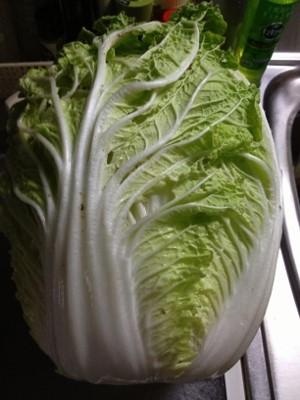2014.1.12白菜