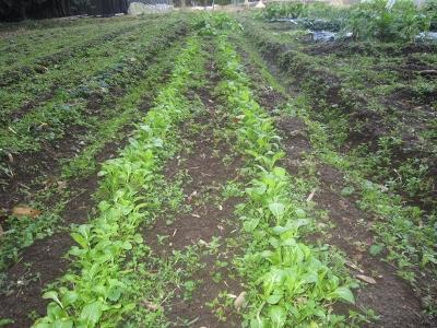 2014.1.14家庭菜園