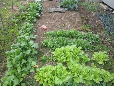 2014.1.17家庭菜園3