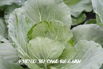 2014.10.3菜園
