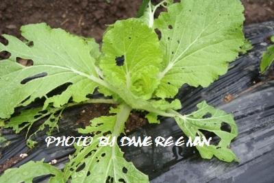 2014.10.3菜園3