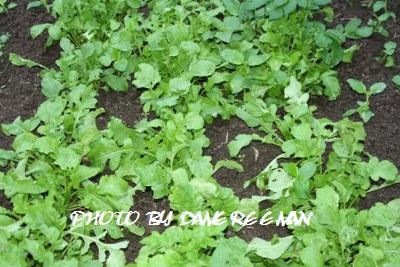 2014.10.3菜園5