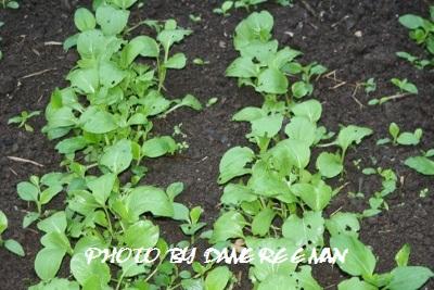 2014.10.3菜園7