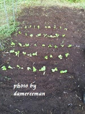 2014.10.18菜園